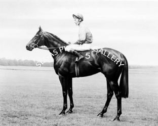 Wolver Hollow with Lester Piggott (587-01b)